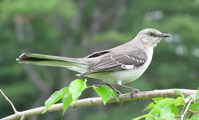 Mockingbirds and Armadillos (1/2)
