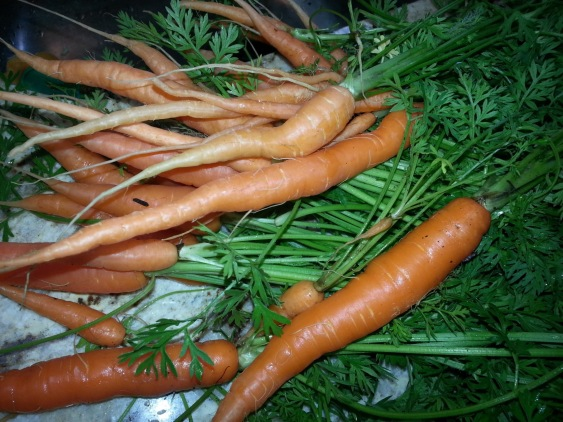 Give carrots room to grow and reap the rewards